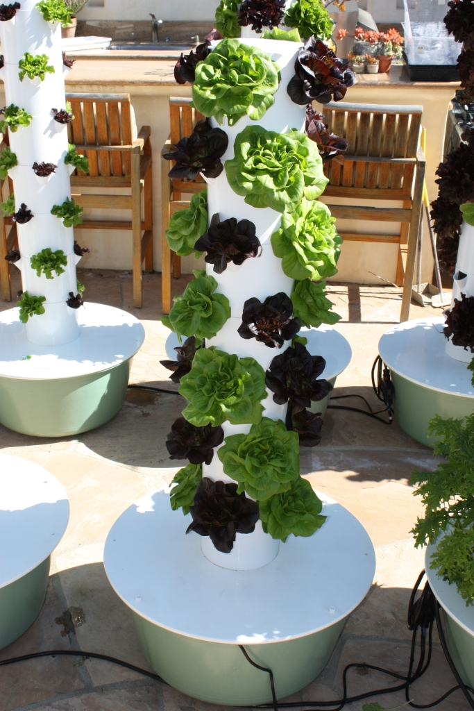 Dallas Water Company >> Single Hydroponic Tower