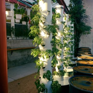 Mudhen Towers - Dallas Urban Farms