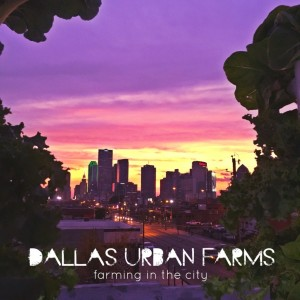 Farm in the City - Dallas Urban Farms