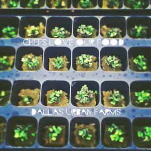 Seedlings! - Dallas Urban Farms